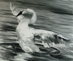 Watercolor Art - Black And White Landing