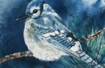 Watercolor Art - Blue Jay